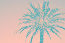 Abstract Tropical Nature Backg...
