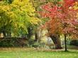 canvas print picture Park in Autumn