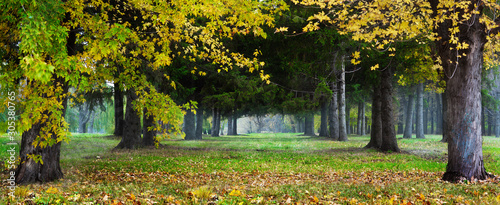 Montage in der Fensternische Pistazie Autumn forest with yellow trees