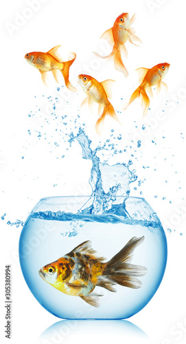 Valokuva  A goldfish jumping out of the fishbowl