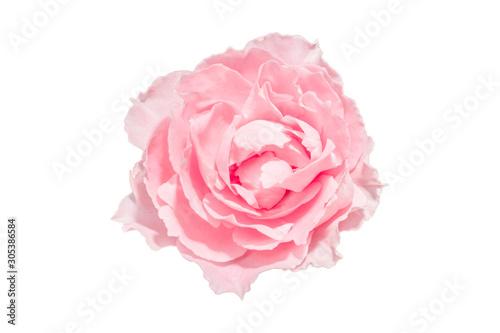 Photo  Pink rose flower isolated white background.
