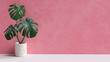 canvas print picture Tropical leaves on pink background copy space. Monstera plant pot houseplant minimal composition. 3d rendering.