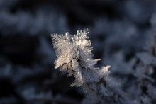 Dry Branch Covered With Hoarfrost Ice Snow Crystals Close Up Selective Focus. Winter Flower