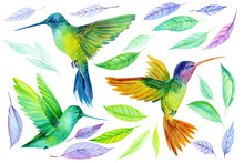 Watercolor Illustration, Beautiful Tropical Bird, Hummingbird And Colored Leaves In Isolated White Background