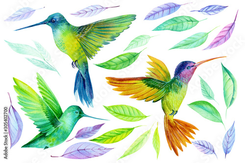 Photo watercolor illustration, beautiful tropical bird, hummingbird and colored leaves