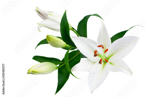Foto White lily flowers and buds with green leaves on white background isolated close