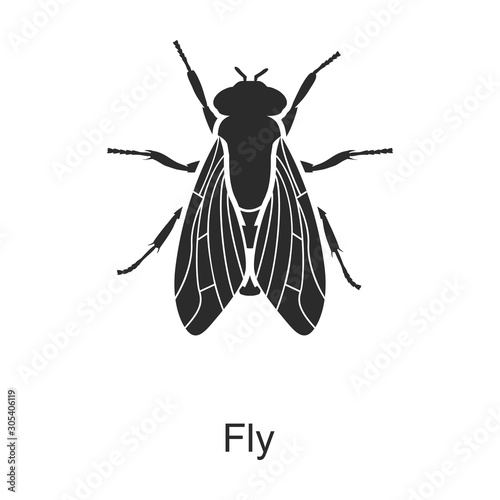 Foto Insect fly vector icon