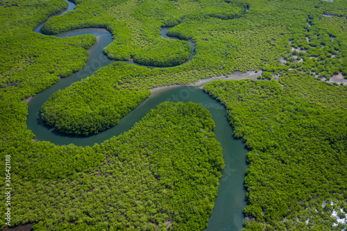 Foto auf AluDibond Grun Aerial view of mangrove forest in Gambia. Photo made by drone from above. Africa Natural Landscape.