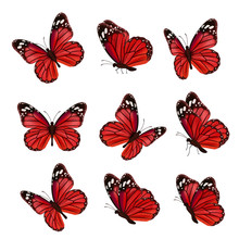 Butterflies Collection. Beautiful Nature Colored Flying Insects Ornamental Wings Moth Vector Realistic Butterfly. Colored Insect Moth Flying, Natural Fly Illustration