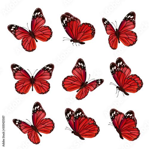 Fotografie, Obraz Butterflies collection