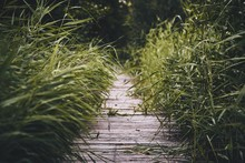 Closeup Of A Wooden Pathway Surrounded By Green Grasses And Plants