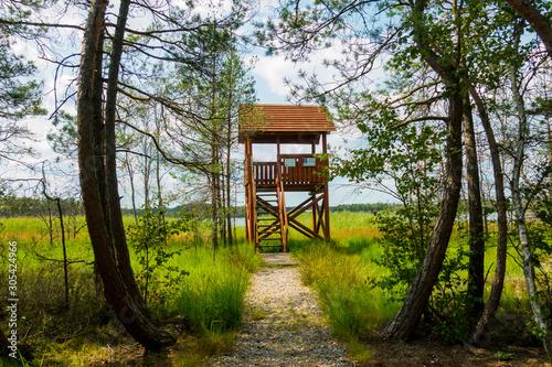 Fototapeta Wieża widokowa ambona las trzciny obraz