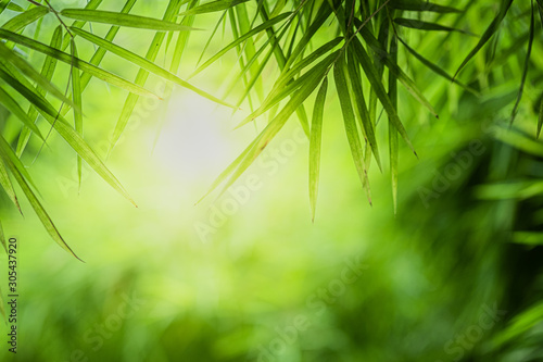 Obrazy do salonu kosmetycznego  closeup-beautiful-view-of-nature-green-bamboo-leaf-on-greenery-blurred-background-with-sunlight