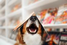 Happy Dog Holds A Magazine On ...