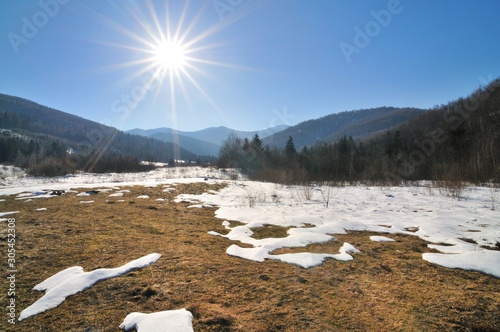 Photo Forest glade on a sunny spring day