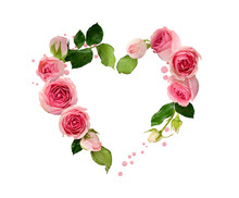 Pink Rose Flowers, Buds And Gl...