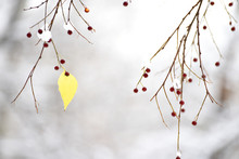 A Branch With Yellow Leaves An...