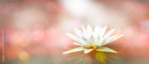 Poster de jardin Nénuphars Soft white lotus on pond with soft pink sunlight blur bokeh reflection on panorama background, Lily water flower on the lake