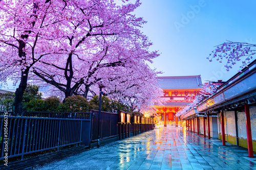 Cherry blossom season at Asakusa temple Tokyo Japan Tableau sur Toile
