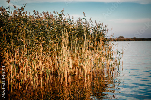 Lake with reeds at sunset