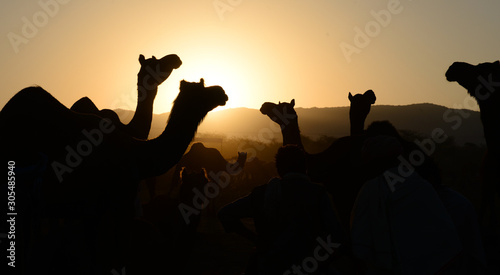 Photo  Camel silhouette on Sunset during Pushkar Camel Fair in the Indian state of Rajasthan