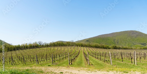 Rows of vineyards in a mountain valley