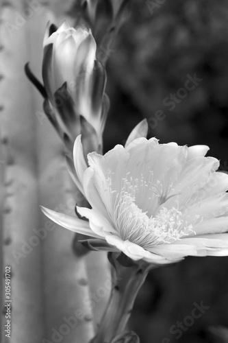 Fototapety, obrazy: desert flower bloom