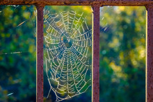 Sunlight On Spider Web Covered...