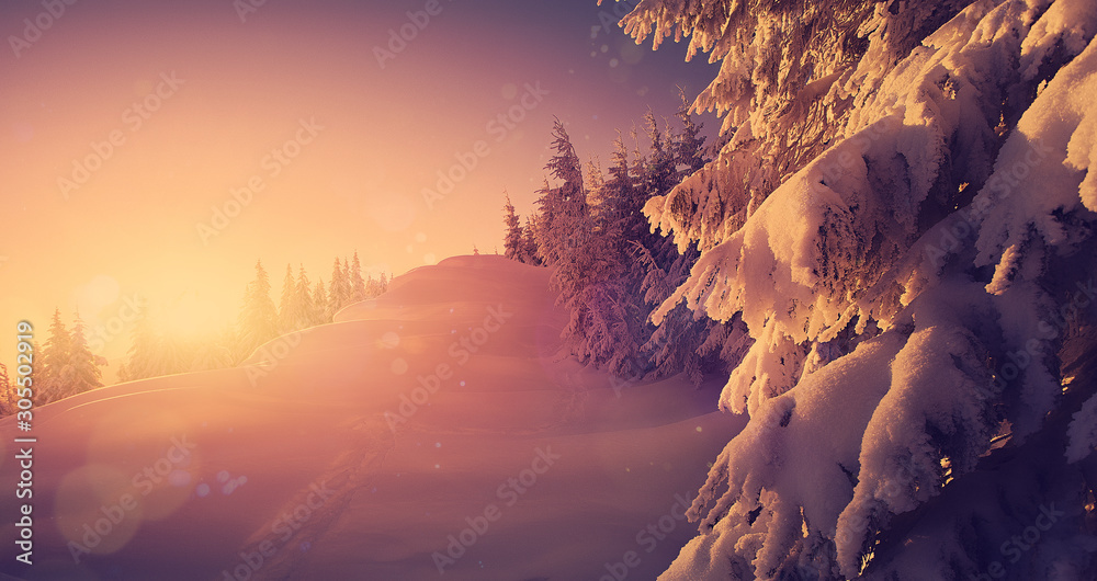 Fantastic Winter Sunset at mountains. Winter scene .Frozenned Trees glowing sunlight. Pine forest under sunlit during sunset. Christmas holiday background. Beautiful nature scene. Wintery scenery