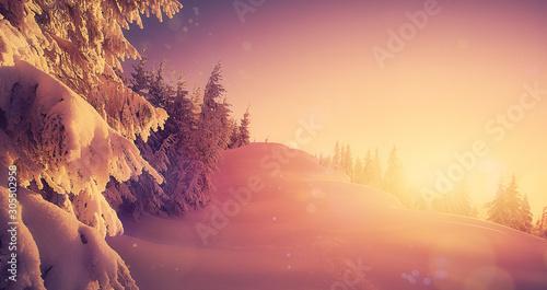Foto auf Gartenposter Beige Beautiful natural landscape. magic calm winter forest during sunset with snow drops, winter scene. Amazing nature Background. Beautiful world