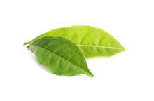Fresh Green Tea Leaves Isolate...