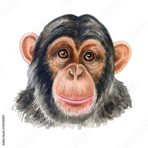 porthite-malpa-imphimpanzee-kolorowy
