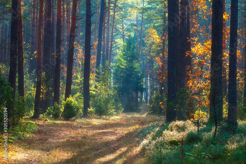 Foto op Plexiglas Bos Beautiful autumn nature landscape. Sunny forest. Yellow and red trees in sunlight. Scenic Fall