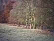 canvas print picture English Autumn Woodland