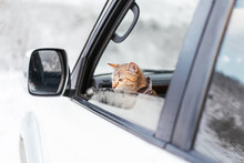 Cute Traveler Cat Looking Out ...
