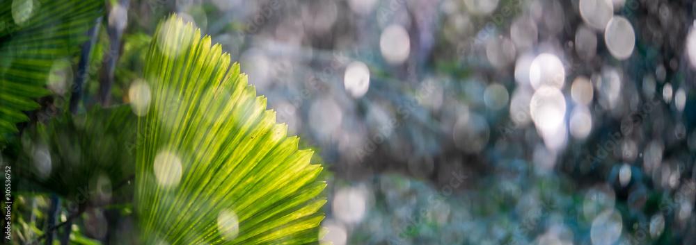 Fototapeta Tropical palm leaf in a rain shower in wet season