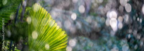 Tropical palm leaf in a rain shower in wet season Fototapeta
