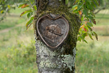 Beautiful Natural Heart In Old...