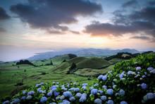 Flores, Hydrangea Wild Field L...