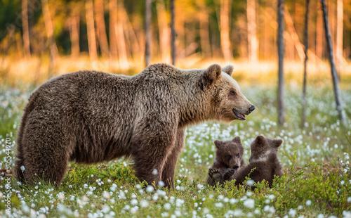 Valokuvatapetti She-bear and playfull bear cubs