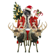 The Black Rat In A Red Santa Claus Suit Is Riding The Reindeer Sleigh With A Christmas Tree Decorated With Pieces Of Cheese And A Boot Of Sweet Gifts. White Backgrount. Isolated.