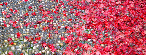 red-flowers-on-a-white-background-panorama-banner-log
