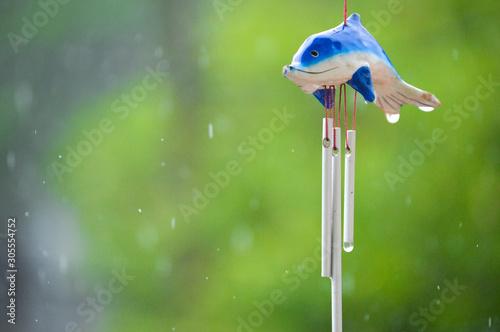 Photo Delfin mojado