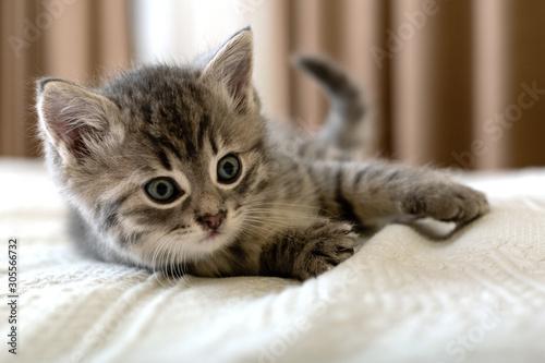 Cute tabby kitten lies on white plaid at home Tableau sur Toile