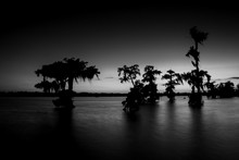 Black And White Lake Swamp Cyp...