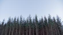 Wooded Treeline