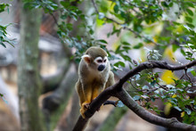 Spider Monkey Hanging Out In A Tree