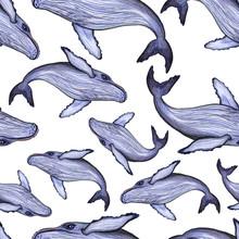 Whale Watercolor Pencils Seaml...