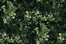 Fresh Green Fern Leaves Patter...