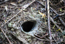 Hole Or The Nest Of Thailand B...